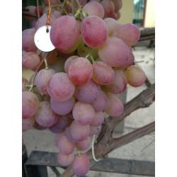Фламинго виноград